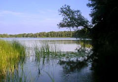 Blauw - The Scene (Harry Mijland) Tags: lake holland reflection tree netherlands meer nederland nl maarssen dearharry maarsseveen harrymijland