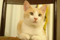 Şeftalim (Marchnwe) Tags: pink cute eye yellow cat nose paw eyes chair whiskers paws kedi sevimli şeftali