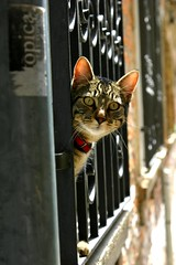 Venice kitty (petebeck) Tags: venice italy kitty sweetie furryfriday veryfriendly