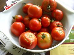 20060710 tomato sauce 01 by jspatchwork