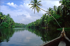 lush green backwaters (Ron Layters) Tags: trees india green palms geotagged interestingness slide kerala palm explore palmtrees transparency getty backwaters backwater godsowncountry flickrfly ronlayters geo:lat=843632 geo:lon=769557 slidefilmthenscanned