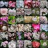 Kalmia mosaic (-Merce-) Tags: flower topv111 interestingness fdsflickrtoys mosaic flor mosaico mountainlaurel laurel kalmia interestingness47 i500 mmbmrs