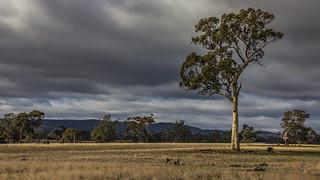 Aussie farmland