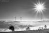 DSC05788-f (Fooß) Tags: flickrchallengewinner flickrchallengegroup schwarz weis bw