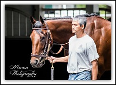 American Pharoah (EASY GOER) Tags: horses horse ny newyork sports race canon track competition running racing historic 5d halloffame athletes races legend thoroughbred equine thoroughbreds belmontpark markiii equines belmontstakes triplecrownwinner bobbafferttrainee