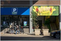 Bench, Flowers and Car (macwagen) Tags: flower men bench downtown lexington kentucky ky guys pedestrians