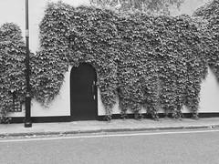 Leaf Door (DanCupples) Tags: streets london overgrown leaf leafs doorstep doot