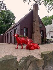 2 rote Kühe