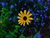 DSCF1345 (LarryJ47) Tags: summer flower contrast photography fuji elite x10 extravert