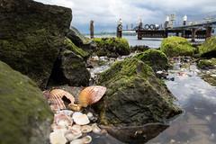 Waterside (michael_hamburg69) Tags: germany deutschland pier wasser stones shell steine kiel schleswigholstein steg muschel förde holtenau eintagammeer holtenauerreede photowalkmitandy