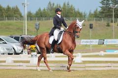 112 (anniinaorvokki) Tags: horses horse chestnut equestrian dressage warmblood