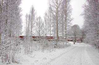 White winter walk