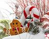 Season's Gifts (brianloganphoto) Tags: morning newyork conditions warwickday christmas holiday snow warwick unitedstates us