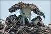 Happy New Year (Nikographer [Jon]) Tags: happynewyear maryland osprey md 20160709d500009353 easternshore summer 2016 jul july nikographer