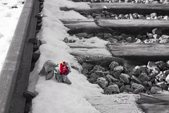 Birkenau ... (Auschwitz) (Alex Verweij) Tags: concentratiekamp vernietigingskamp nazi nazieduitsland heinrichhimmler ss reichsfuhrer auschwitz polen joden vergast kampoudste oswiecim kapo hoss neverforget nooitvergeten emotie kamp gas distroy tweedewereldoorlog war birkenau rose rail redrose roos rood roderoos dood dead spoorrails spoor sneeuw snow winter biels bielzen