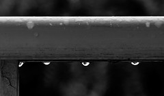 DROPS - GOTAS (jpi-linfatiko) Tags: bn bw blancoynegro blackandwhite blanconegro blackwhite drops gotas gotasdelluvia lluvia rain raindrops nikon d5200 sigma1770 baranda railing detail detalle zoom