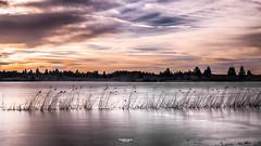 Viens faire avec moi le mélange des couleurs... (Tra Te E Me (TTEM)) Tags: lumixfz1000 photoshop cameraraw lac gelé patinage doubs bouverans roseaux glace ciel couleurs nuages franchecomté hdr paysage nature