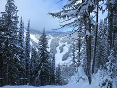 Snowy trees on Spin Cycle (Ruth and Dave) Tags: spincycle blackrun mountmorissey sunpeaks skiresort mountain piste skirun
