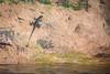 Hanging Out for Sunset (jeff_a_goldberg) Tags: sarapiquiriver sarapiqui lizard naturalhabitatadventures nathab winter costarica heredia cr