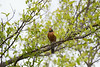 lake katherine. july 2016 (timp37) Tags: summer illinois lake katherine bird tree july 2016 palos heights