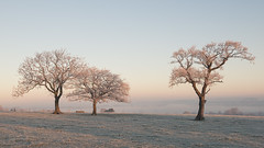 Three's a Crowd (JamesPicture) Tags: frost staffordshire stallington life moorlands staffs trees mist misty stoke trent