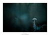 Blue fear (Naska Photographie) Tags: naska photographie photo photographe paysage proxy proxyphoto macro macrophotographie macrophoto extérieur forest foret nature sauvage blue champignon mushroom color couleur bokeh nuit night dark darkness