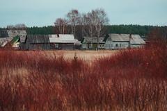 Осень (engine9.ru) Tags: тойма осень красный дома кустарники поле house architecture arkhangelsk toyma red bush