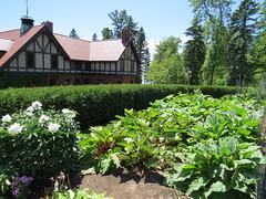 Rhubarb in the Gardens (pirate johnny) Tags: glensheen duluth mansion minnesota rhubarb