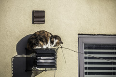 Cat on a hot tin extractor fan (tootdood) Tags: canon70d manchester newislington cat hot tin extractor fan moggie