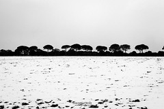 snow tales #01 (C*D*F) Tags: neve fiocchi bianconero blackwhite snow snowflakes