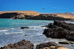 Paracas-161 (m.lencioni3) Tags: paracas peru perù quad ocean pacific pacifico oceano pellicano birds southamerica sony sonya7 fe35mmf28zazeisssonnart fe55mmf18zazeisssonnart konicaminolta1735mmf2845 tour travel trip gringotrail