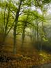 De cuento (la_magia) Tags: bierzo bosque busmayor naturaleza niebla arbol otoño león españa