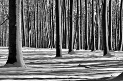 Mein Wald