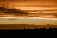 Waiinu: 8.2.2017 at 19:30h (m+m+t) Tags: dscf36901 mmt meredithbibersteindesign newzealand northisland taranaki waiinubeach coast sky evening sunset clouds silhouette trees fujixt1 fujixseries fujimirrorless 1855mm windy gale wild storm outdoors landscape