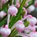 Nodding In Pink