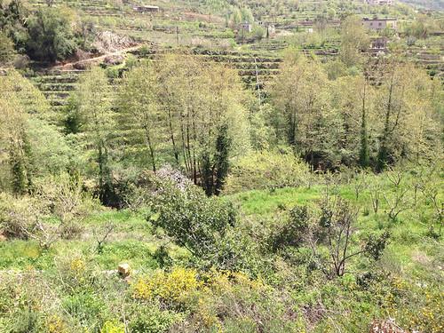 Tout Berry Farms at Nabeh El Saffa bb 2014