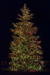 CW354 Longwood Gardens Christmas Lights (listentoreason) Tags: christmas usa holiday night america canon unitedstates pennsylvania scenic favorites places christmastree event ornament christmasornament longwoodgardens ef28135mmf3556isusm holidaylighting score30