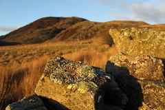 Taith gerdded i Lyn y Manod (Rory Francis) Tags: manod ffestiniog gwynedd calan newyearsday landscape golden aur euraidd tirwedd tirlun wal waliau drystonewalls waliaucerrigsych