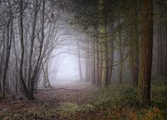 Mysterious (jactoll) Tags: wixford alcester warwickshire winter woods woodland forest trees fog foggy mist misty mood moody light landscape appicoftheweek sony a7ii zeiss 70200mmf4 jactoll