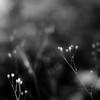 Summer Wildflowers 036 (noahbw) Tags: d5000 dof nikon abstract blackwhite blackandwhite blur bw depthoffield flowers forest hellernaturecenter landscape minimal minimalism monochrome natural noahbw square summer woods