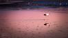 Flamenco en la Laguna Chaxa (josefrancisco.salgado) Tags: 70200mmf28gvrii atacamadesert chile d810a desiertodeatacama iiregióndeantofagasta lagunachaxa nikkor nikon provinciadeelloa reservanacionallosflamencos ave bird desert desierto fauna flamenco flamingo pájaro salar saltflats cl