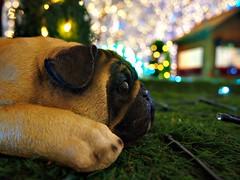 Dog objects and illuminations (hoshinosuna bega) Tags: dog objects illuminations