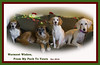 WEEK 51: HOLIDAY WISHES (shannon_blueswf) Tags: photochallenge2016 photochallengeorg photochallenge 52weekphotochallenge holiday card dogs pack family wishes winter christmas