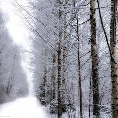 winter road (sami kuosmanen) Tags: suomi finland forest taivas tree talvi trees winter white wood puu photography tie kuusankoski kouvola koivu birch bokeh luonto light landscape lumi soft