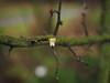 first blossom of 2017 (Johnson Cameraface) Tags: 2017 january winter olympus omde1 em1 micro43 mzuiko 1240mm f28 johnsoncameraface blossom tree flower signofspring