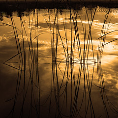 swimming lights (G. For._active again) Tags: lake evening weed gold reflection reflected clouds water mirror outdoor