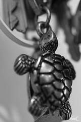 06 - Hanging Turtle (Fippo Gomes) Tags: 2017 365 canon sl1 chave chaveiro key macro tartaruga turtle
