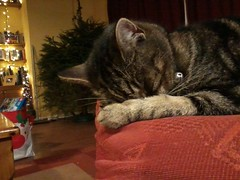 Paws for thought (Sundornvic) Tags: cat sleeping rest sleep paws chair arm resting tabby