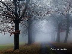 2017-01-08 allée du château (25)f (april-mo) Tags: fog brouillard mist misty foggy wood treesinfog winter bois secretwood alléeduchâteau trees arbres nature