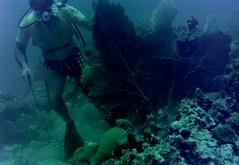 n0005.12 (avaragado) Tags: barbados coralreefclub fd197504 fd197604 fd197905 n0005 tonysmith